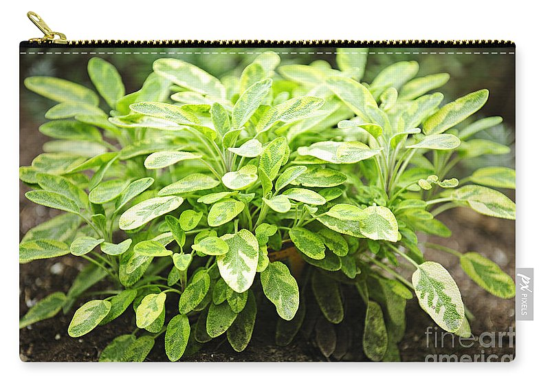 Sage Carry-all Pouch featuring the photograph Sage Plant by Elena Elisseeva
