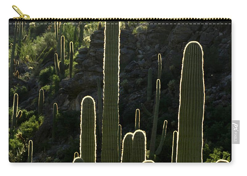 Saguaro Carry-all Pouch featuring the photograph Saguaro Cactus Backlit by Jill Reger