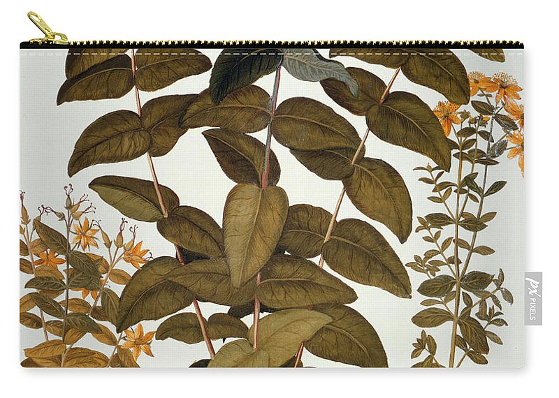 1613 Carry-all Pouch featuring the photograph Saint-johns-wort, 1613 by Granger