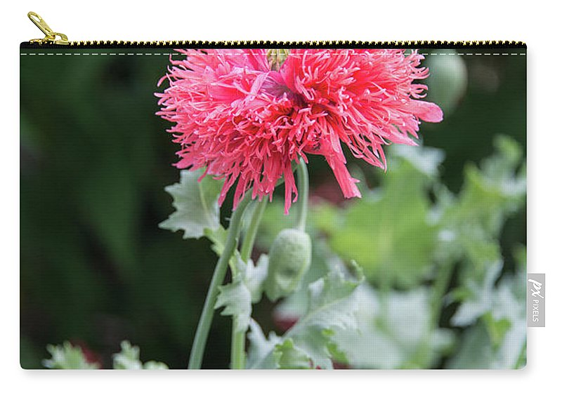 Salmon Carry-all Pouch featuring the photograph Salmon Poppy by Michael Bessler