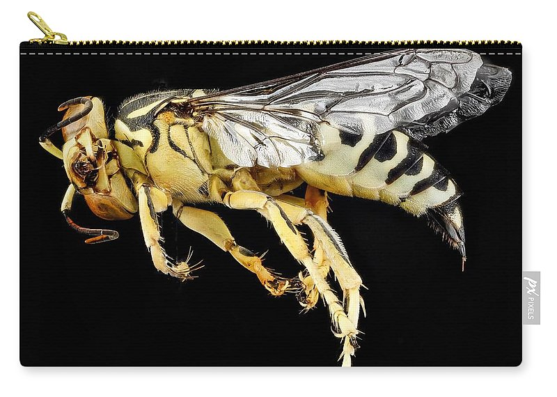 Wasp Carry-all Pouch featuring the photograph Sand Wasp by FL collection