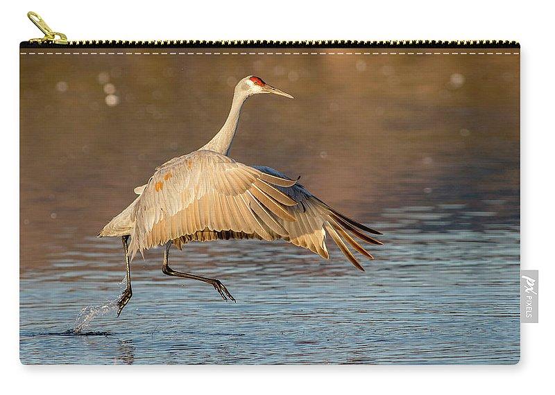 Sandhill Crane Carry-all Pouch featuring the photograph Sandhill Crane Dance by Judi Dressler
