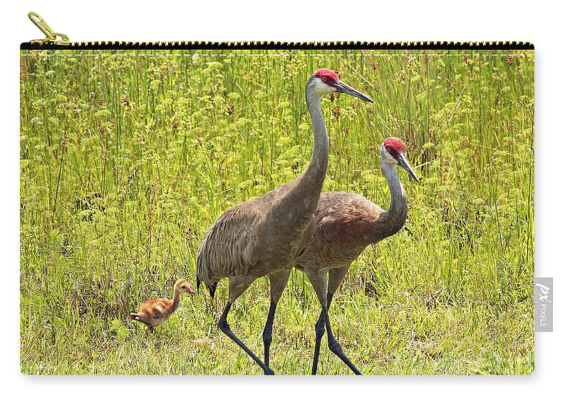Sandhill Cranes Carry-all Pouch featuring the photograph Sandhill Crane Family by Carol Groenen