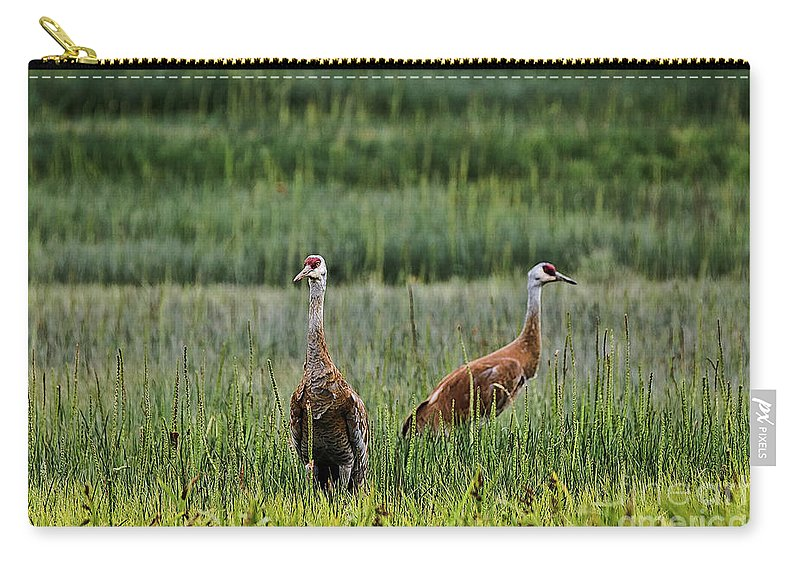 Cranes Carry-all Pouch featuring the photograph Sandhill Cranes II by Amber D Hathaway Photography