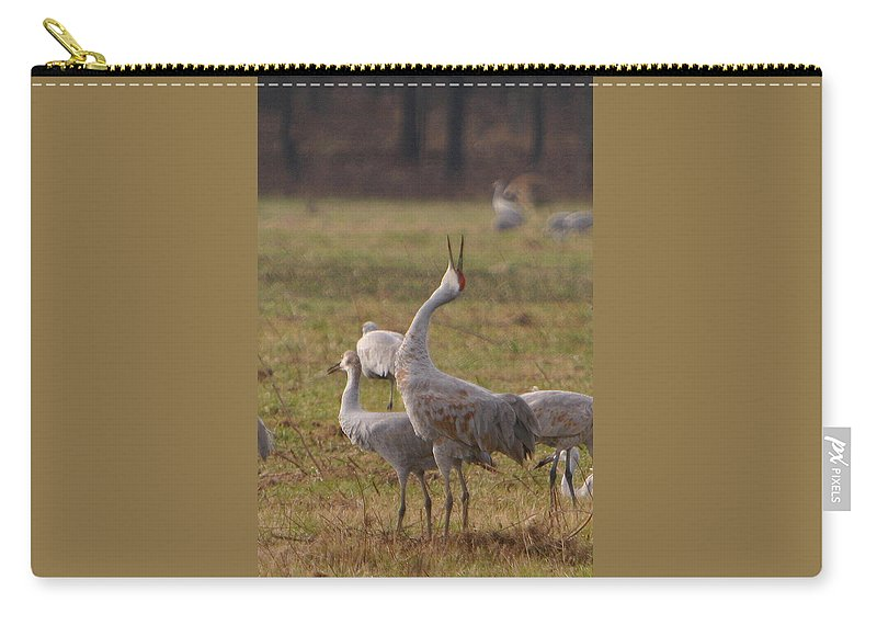 Sandhill Crane Birds Mating Calliing Nature Wildlife Photography Photograph Carry-all Pouch featuring the photograph Sandhill Delight by Shari Jardina