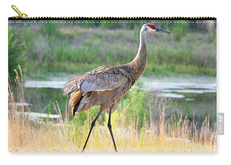 Sandhill Crane Carry-all Pouch featuring the photograph Sandhill In The Sunshine by Carol Groenen