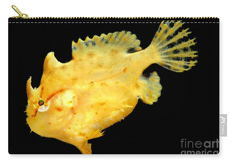 Frogfish Carry-all Pouch featuring the photograph Sargassum Anglerfish by Dant� Fenolio