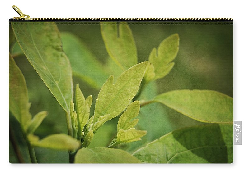 Sassafrass Carry-all Pouch featuring the photograph Sassafras Tree by Amber Flowers