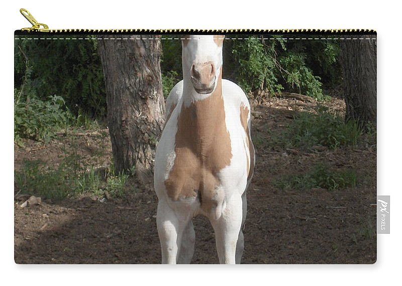 Horse Horses Colt Filly Mare Stallion Foal Ranch Farm Herd Paint Attitude Carry-all Pouch featuring the photograph Sassy Filly by Andrea Lawrence