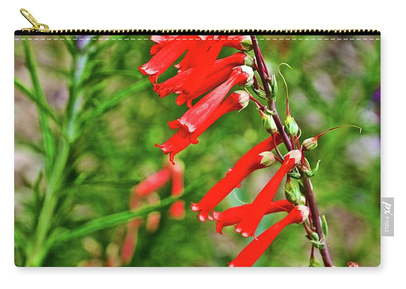 Scarlet Bugler In Rancho Santa Ana Botanic Garden In Claremont Carry-all Pouch featuring the photograph Scarlet Bugler In Rancho Santa Ana Botanic Garden In Claremont-californi by Ruth Hager