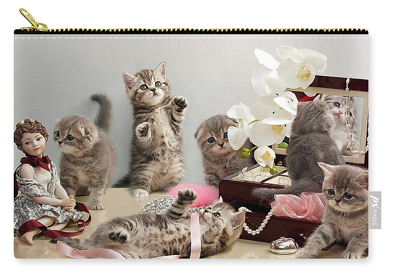 Scottish Fold Cats Carry-all Pouch featuring the photograph Scottish Fold Cats by Evgeniy Lankin