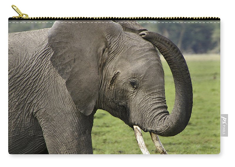 Africa Carry-all Pouch featuring the photograph Scratching An Itch by Michele Burgess