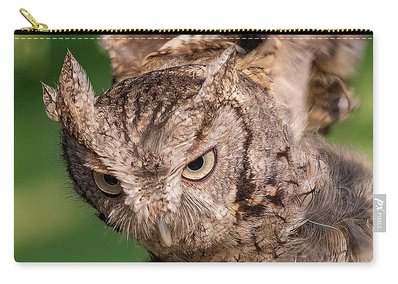 Screech Owl Carry-all Pouch featuring the photograph Screech Owl In Flight by Lowell Monke