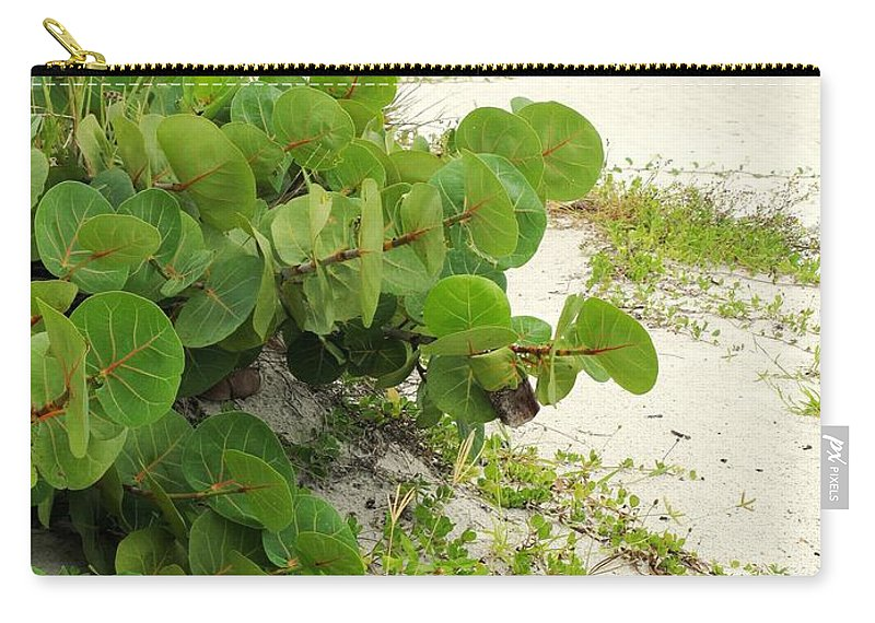 Florida Carry-all Pouch featuring the photograph Sea Grapes by Ian MacDonald