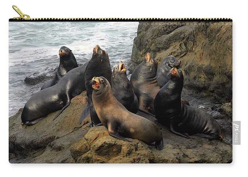 Sea Lion Carry-all Pouch featuring the photograph Sea Lion Chorus by Randall Ingalls