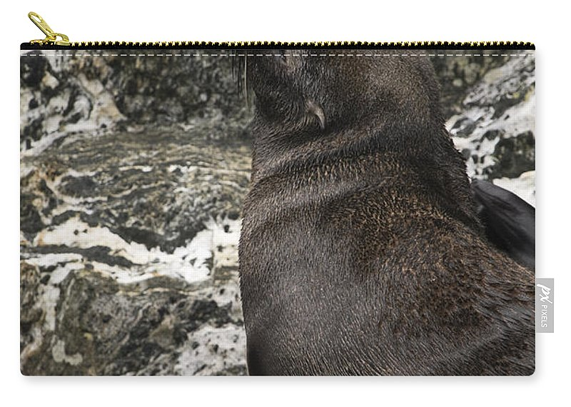 Sea Lion On Rock Carry-all Pouch featuring the photograph Sea Lion Close-up by Sally Weigand