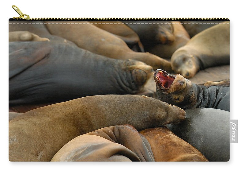 Sea Lions Pier 39 San Francisco Animal Photography Carry-all Pouch featuring the photograph Sea Lions At Pier 39 San Francisco by Sebastian Musial