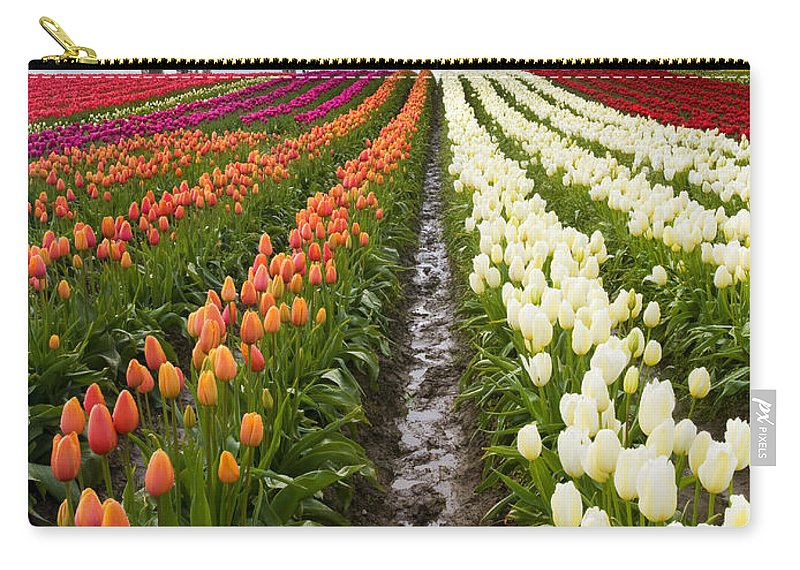 Tulips Carry-all Pouch featuring the photograph Sea Of Color by Mike Dawson