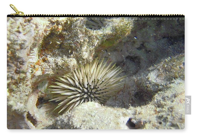 Animal Carry-all Pouch featuring the photograph Sea Urchin by Michael Peychich