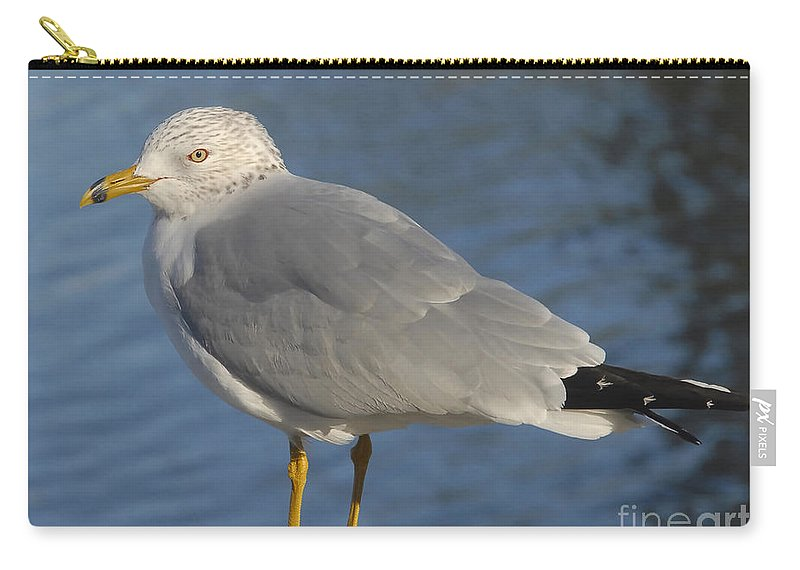 Seagull Carry-all Pouch featuring the photograph Seagull by David Lee Thompson