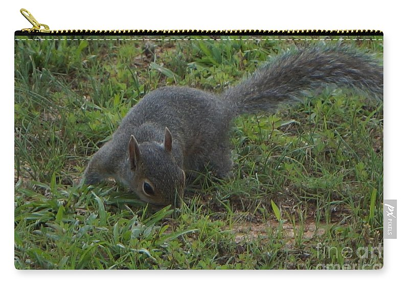 Squirrel Carry-all Pouch featuring the photograph Searching by Maxine Billings