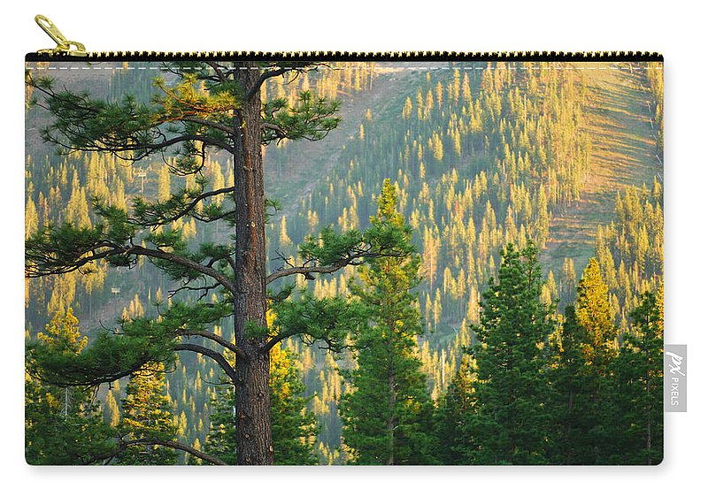 Forest Carry-all Pouch featuring the photograph Seeing The Forest Through The Tree by Jill Reger
