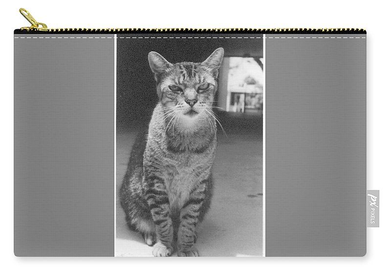 Cat Carry-all Pouch featuring the photograph Serious Cat Model by Liza Beckerman