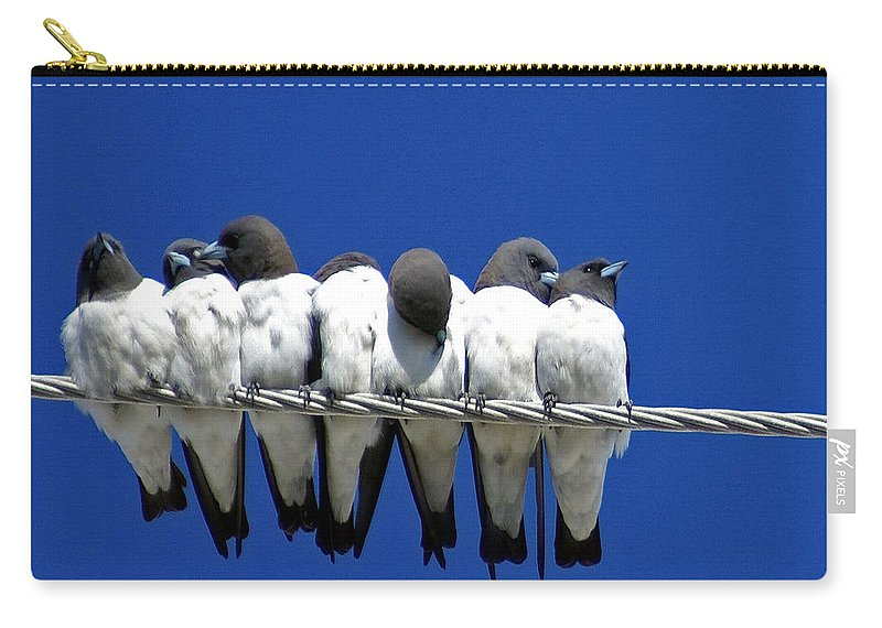 Animals Carry-all Pouch featuring the photograph Seven Swallows Sitting by Holly Kempe