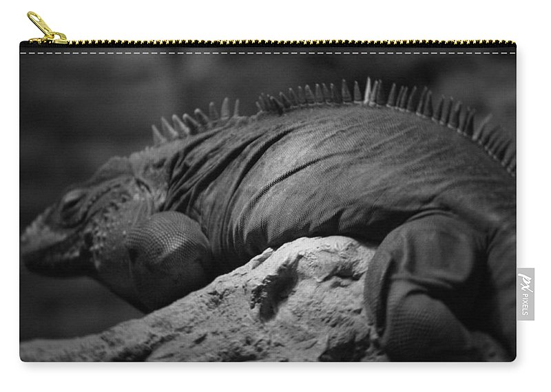 Chicago Carry-all Pouch featuring the photograph Shedd Aquarium Iguana by Kyle Hanson