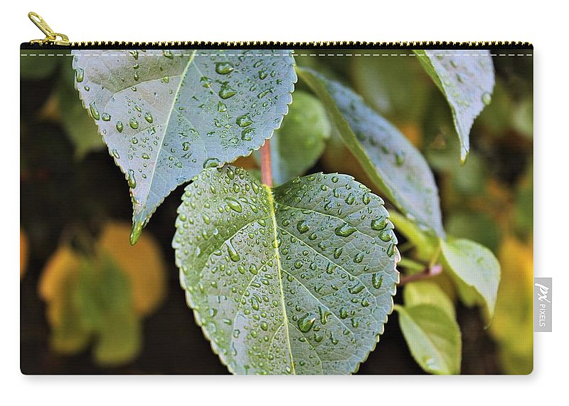 Leaves Carry-all Pouch featuring the photograph Shine by Claudette Letendre