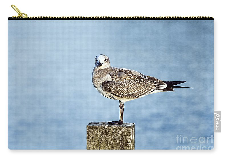 Corolla Carry-all Pouch featuring the photograph Shorebird by John Greim