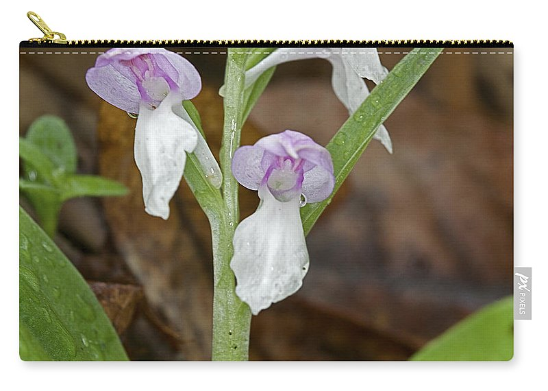 Background Carry-all Pouch featuring the photograph Showy Orchis by Jack R Perry