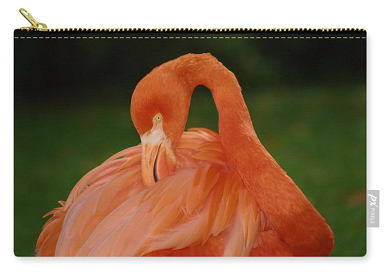 Flamingo Carry-all Pouch featuring the photograph shy by Gaby Swanson