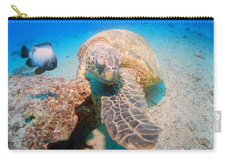 Carry-all Pouch featuring the photograph Shy Guy by Todd Hummel
