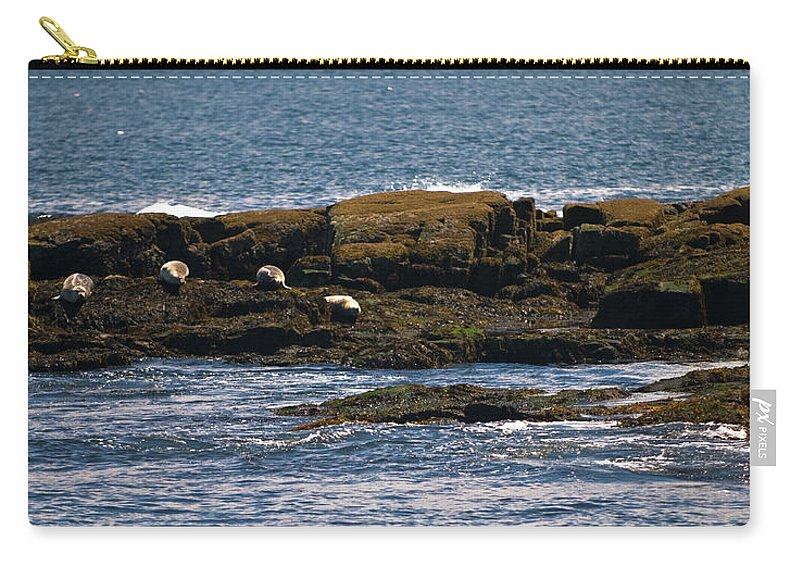 harbor Seals Carry-all Pouch featuring the photograph Siesta by Paul Mangold