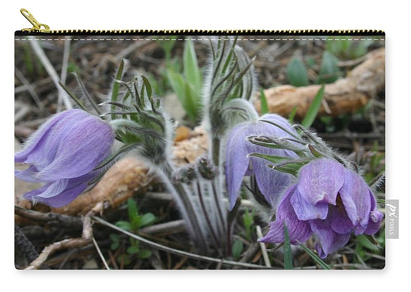Pasque Flower Carry-all Pouch featuring the photograph Signs Of Spring by Nelson Strong