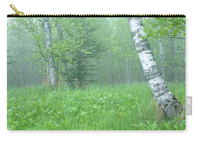Landscape Carry-all Pouch featuring the photograph Silent Birch by Bill Morgenstern