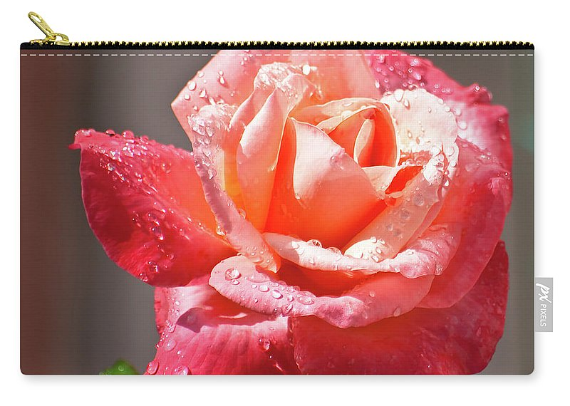 Rose Carry-all Pouch featuring the photograph Silver Wedding by Brian Roscorla