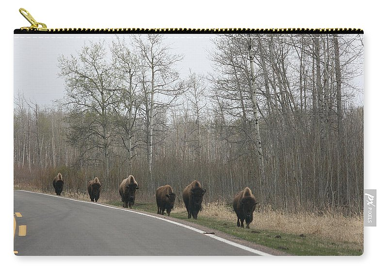 Buffalo Bison Herd Roaming National Park Edmonton Ab Elk Island Carry-all Pouch featuring the photograph Single File Now by Andrea Lawrence