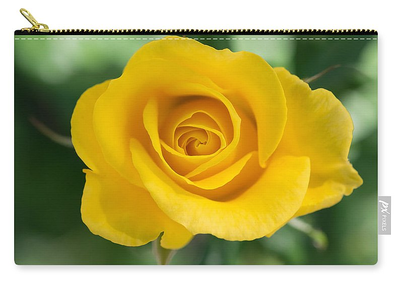 Follower Carry-all Pouch featuring the photograph Single Yellow Rose by Robert VanDerWal