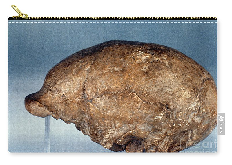 Ancient Carry-all Pouch featuring the photograph Skull Of Peking Man by Granger