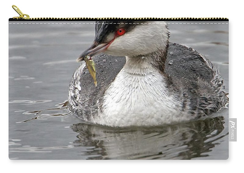 Slavonian Grebe Carry-all Pouch featuring the photograph Slavonian Grebe With Fish by Bob Kemp