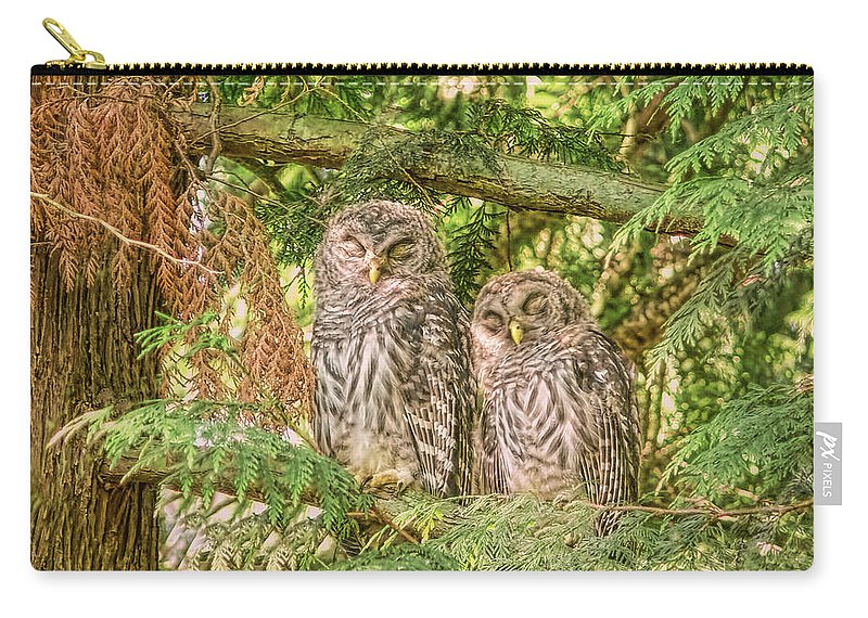 Owl Carry-all Pouch featuring the photograph Sleeping Barred Owlets by Jennie Marie Schell