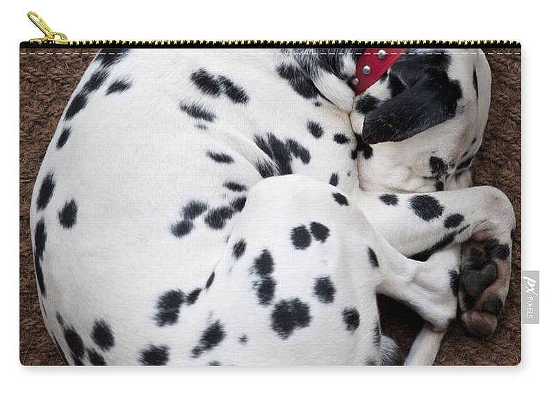 Dog Carry-all Pouch featuring the photograph Sleeping Dalmatian by Rafa Rivas