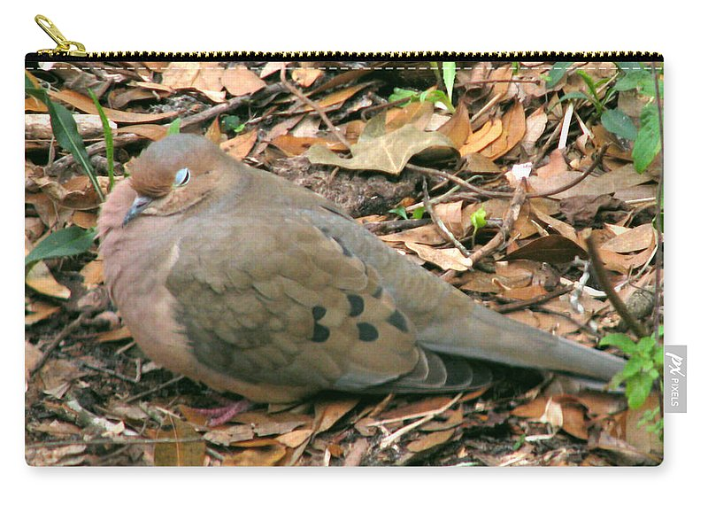 Nature Carry-all Pouch featuring the photograph Sleeping Dove by Peg Urban