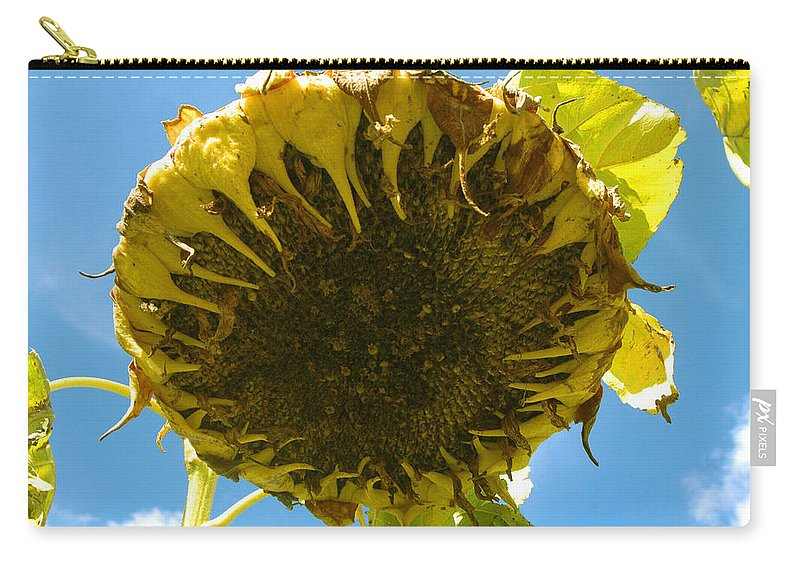 Sunflower Carry-all Pouch featuring the photograph Sleeping Sunflower by Trish Hale