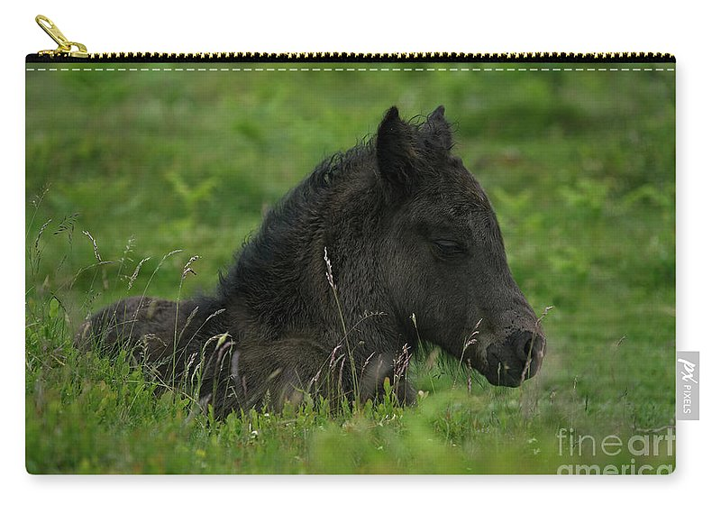 Baby Horse Carry-all Pouch featuring the photograph Sleepy Dartmoor Foal by Rawshutterbug