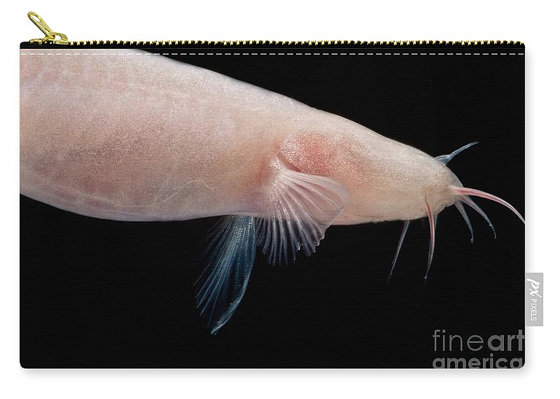 Small Headed Cave Loach Carry-all Pouch featuring the photograph Small Headed Cave Loach by Dant� Fenolio