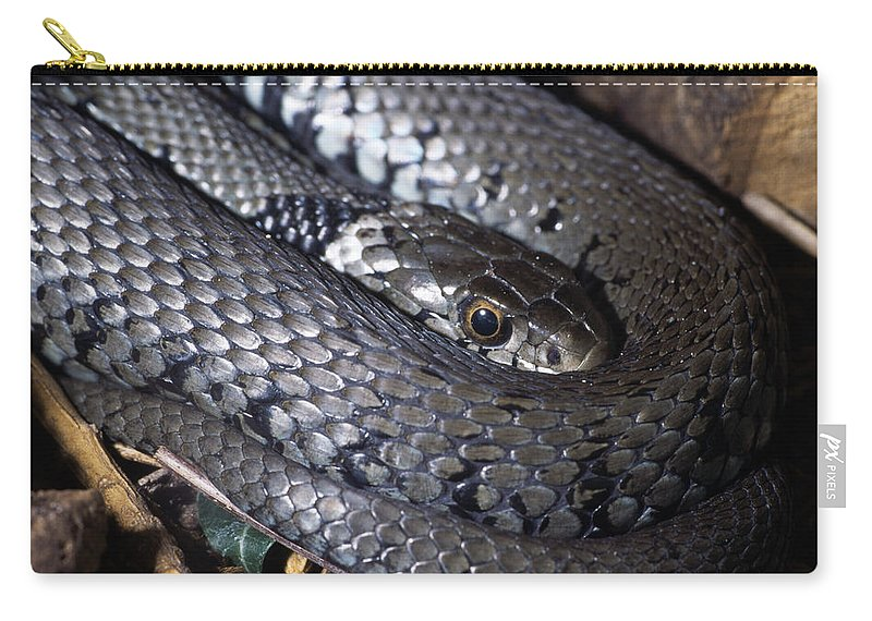 Snake Carry-all Pouch featuring the digital art Snake by Dorothy Binder