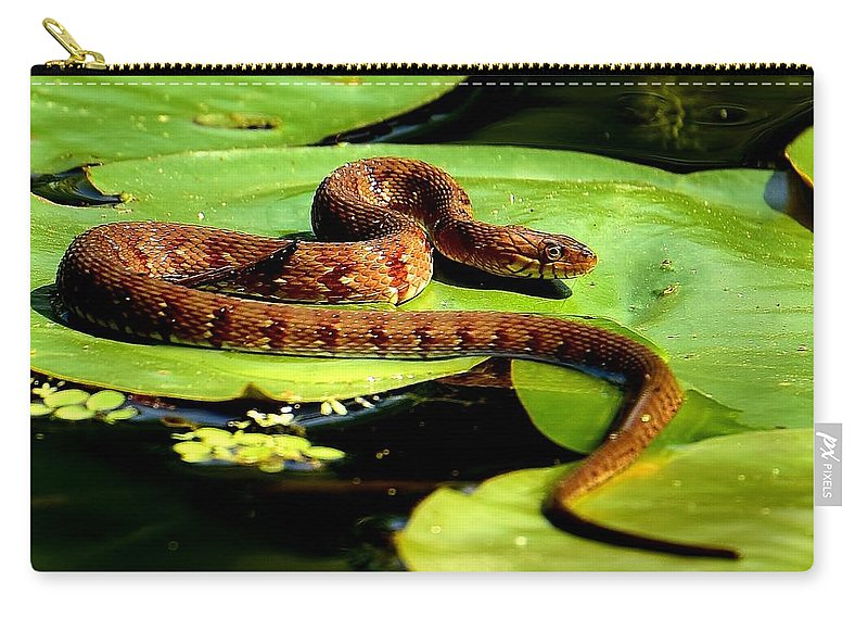Sunning Carry-all Pouch featuring the photograph Snake Life by Lisa Renee Ludlum
